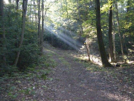 The ski / bike trail